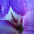 Gladiola Close-up by Kathy Yates