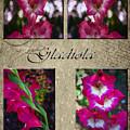Gladiola Collage by Judy Hall-Folde