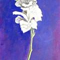 Gladiolus 1 by Usha Shantharam