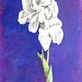 Gladiolus 2 by Usha Shantharam