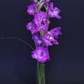 Gladiolus by Brian Roscorla