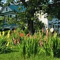 Gladiolus by Kathryn Meyer