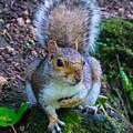 Glasgow Squirrel by David Brodie