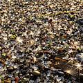 Glass Beach by Alan Kepler