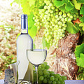 White Wine In Vineyard by Anastasy Yarmolovich