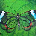 Glass Wing Butterfly by Sharon Duguay