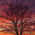 Glen Iris Sunrise by Robert Caddy