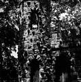 Glen Island Castle  by Richard Rizzo
