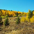 Glen Of Color by Greg Plamp