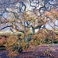 Glen Park Manor Garden by Steven Natanson