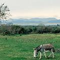 Glenbeigh Ireland by Lauri Novak