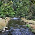 Glendasan River. by Terence Davis