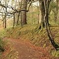 Glengarry Forest Scotland by Daren Griffin