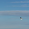 Gliding Along by Erin Rosenblum