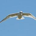 Gliding by Barbara S Nickerson
