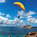 Gliding Over Makapuu by Susan Rissi Tregoning