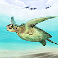 Gliding The Coastline by Kevin Putman