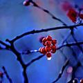 Glistening Hope by Dave Pellegrini