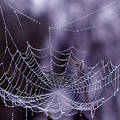 Glistening Web by Karol Livote