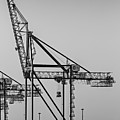 Global Containers Terminal Cargo Freight Cranes Bw by Susan Candelario