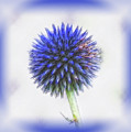 Globe Thistle With Vignette by MTBobbins Photography