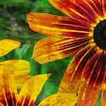 Gloriosa Daisy by JAMART Photography