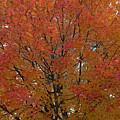 Glorious Autumn by Paulette B Wright
