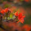 Glorious Blooms by Mike Reid