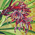 Glorious Crinum by Suzanne McKee