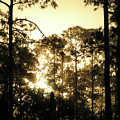 Glorious Dawn by Peg Urban