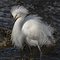Glorious Egret by Bruce Frye