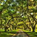 Glorious Entrance Tomotley Plantation South Carolina  by Reid Callaway