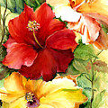 Glorious Hibiscus by Priscilla Powers
