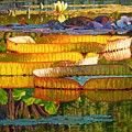 Glorious Morning Lilies by John Lautermilch