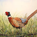 Glorious Pheasant-1 by Jean Plout