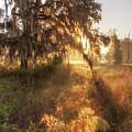 Glorious Sunrise At The Oak Tree by Ronald Kotinsky