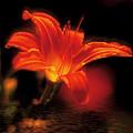 Glow by Bruce Bain