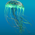 Glow Green Jellyfish by Corey Ford