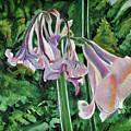 Glowing Amaryllis by Lori Moon