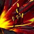 Glowing Flower Power by Ben Upham III