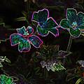 Glowing Flowers by Scott Gould