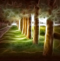 Glowing Forest by Carola Ann-Margret Forsberg