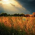 Glowing Grass by Alex Lim