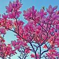 Glowing Magnolia by Jasna Dragun