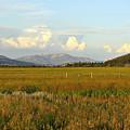 Glowing Meadow by Teresa Zieba