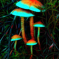 Glowing Mushrooms by Yulia Kazansky