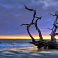 Glowing Sands At Driftwood Beach by Debra and Dave Vanderlaan