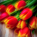 Glowing Tulips by Garry Gay