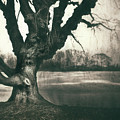 Gnarled Old Tree by Scott Norris