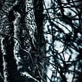 Gnarled Vines Surround A Tree by Scott Chimber